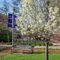 Winona State Blossoms With Bench by Kari Yearous