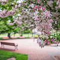 Winona Veterans Memorial With Blossoms by Kari Yearous