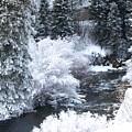 Winter Along The Creek by DeeLon Merritt