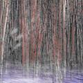 Winter Aspen by Dean Arneson