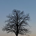Winter Bare by John Taylor