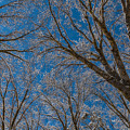 Winter Beauty by Jonathan Nguyen