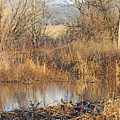 Winter Beaver Dam Charm Co     by Dale Jackson