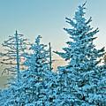 Winter by Bernd Billmayer
