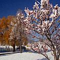 Winter Berries by Martin Massari