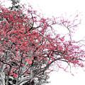 Winter Berries by Scott Hovind
