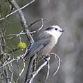Winter Bird  by Jeff Swan