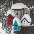 Winter Birdhouses by Tim Nyberg