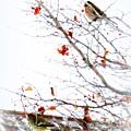 Winter Birds 1 by Diane M Dittus