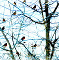Winter Birds 2 by Diane M Dittus