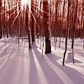 Winter Bling by Edwin Verin