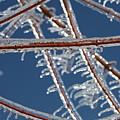 Winter Blue by Nadine Rippelmeyer