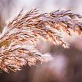 Winter Breeze by Jakub Hasak
