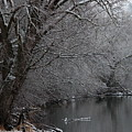 Winter Calm by Carol Groenen