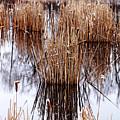 Winter Cattails by Debbie Oppermann