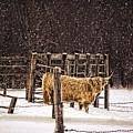 Winter Coat by LuAnn Griffin