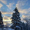 Winter Dawn Over Spruce Trees by Lynn Hansen