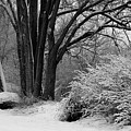Winter Day - Black And White by Carol Groenen