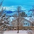 Winter Delight by Nancy Marie Ricketts
