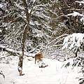 Winter Doe In The Upper Peninsula by Gwen Gibson
