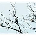 Winter Doves by Katherine Nutt