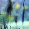 Winter Dreams Abstract by Karen Adams