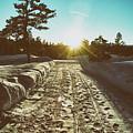 Winter Driveway Sunset by Jason Coward