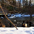 Winter Ducks by Bill Tatarnic