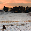 Winter Dusk At Bradgate Park by Linsey Williams