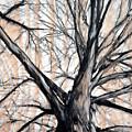 Winter Elm by John Terwilliger