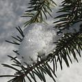 Winter Evergreen by Rose Dellinger