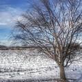 9003 - Winter Farm Willow Tree by Sheryl Sutter