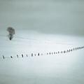 Winter Fence by Leland D Howard