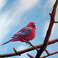 Winter Finch by Brian  Commerford