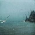Winter Flight by Sally Banfill