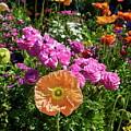 Winter Flowers by Gwyn Newcombe