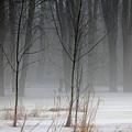 Winter Fog by Debbie Oppermann