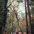 Winter Forest by Joana Kruse