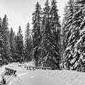 Winter Forest Journey by David Zawila