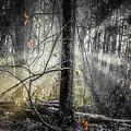 Misty Winter Forest by Ken McAllister