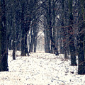 Winter Forest by Miroslav Nemecek
