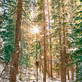 Winter Forest Sunshine by James BO Insogna