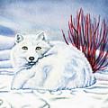 Winter Fox by Antony Galbraith