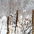Winter Frost by Kimberly Noxon