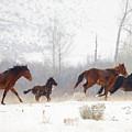 Winter Gallop by Mike  Dawson
