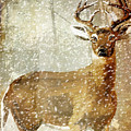 Winter Game Deer by Mindy Sommers