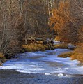 Winter Gold On The Yakima River by Carol Groenen