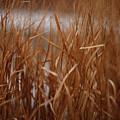 Winter Grass - 1 by Linda Shafer