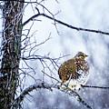 Winter Grouse by Lori Dobbs
