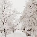 Winter by Gulnara Darbaeva